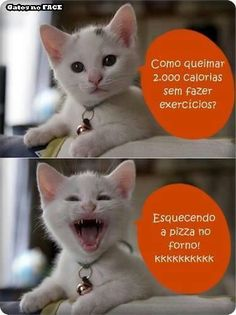 68 Ideas Funny Puns Humor Hilarious Faces For 2019 Gato Do Face, Funny Puns, Hilarious, Funny Stuff, Funny Humor, Cat Memes, Funny Photos, Laugh Out Loud, Funny Animals
