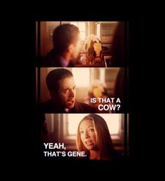 -- Fringe Season 1 Episode 1 Quote Charlie:  Is that a cow? Olivia:  Yeah, that's Gene. Still funny after all these years.