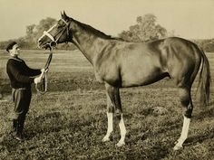 """Kincsem, the Hungarian wonder Kincsem, in Hungarian """"My Precious"""" or """"My Treasure"""" ( March March was the most successful Thoroughbred race horse ever, having won 54 races for Horse Racing, Race Horses, Thoroughbred, Hungary, Budapest, Reptiles, Equestrian, Derby, Guinness"""