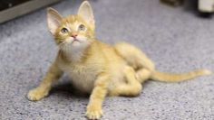 This Kit Rocks!  Determined Kitten Takes Disability in Stride | Pets - Yahoo Shine