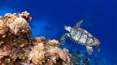 discovery channel sea turtles - Google Search