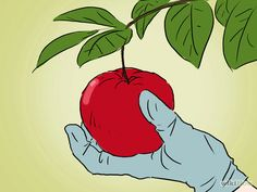 Imagen titulada Grow an Apple Tree from a Seed Step 20