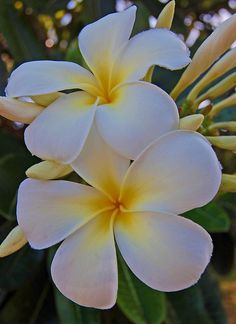 I loved the smell of plumeria flowers in the warm night air on Maui.