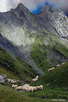 Sheep in Lescun, France. French Alps, French Countryside, Beautiful World, Beautiful Places, Landscape Photography, Nature Photography, Holidays France, Basque Country, Mountain Landscape