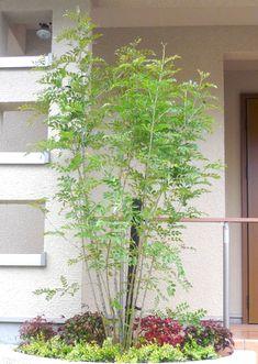 シマトネリコ Japanese Plants, Bamboo Garden, Tiny House Bathroom, Main Entrance, Greenery, Facade, Backyard, Exterior, House Design