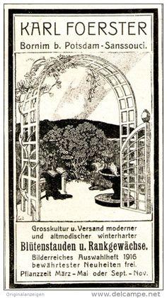 Original-Werbung/Anzeige 1916 - BLÜTENSTAUDEN / RANKGEWÄCHSE / KARL FOERSTER -BORNIM BEI POTSDAM-SANSSOUCI -ca.45x80 mm