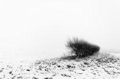 Winter Fog | Flickr - Photo Sharing!