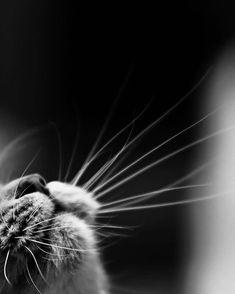 MonChatDoré chat trop mignon dessinchat trop beauphoto de chat mignon et rigolochien Beautiful Cats, Animals Beautiful, Beautiful Creatures, Animals And Pets, Cute Animals, Nature Animals, Wild Animals, Image Chat, Funny Animal Videos
