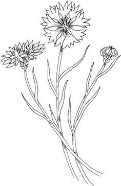 Cornflower/Super coloring pages