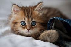 The Kitten Who Won The Internet
