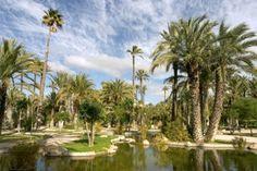 Palm trees, Elche. Palmeral de Elche
