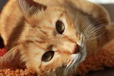Do Cats Have Separation Anxiety? #cat behavior