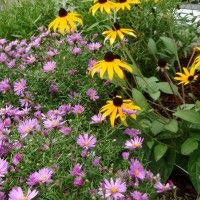 Native West Wildflower seed mix