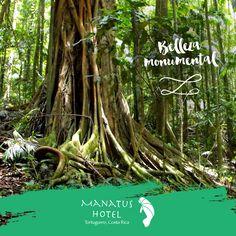 Tortuguero está rodeado por un Bosque Tropical Húmedo en el que se encuentran cerca de 400 especies de árboles. #MaravillasDelTortuguero.