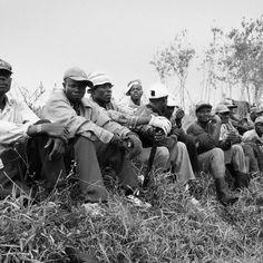 Coupeurs de cannes haïtiens en Republique Dominicaine.
