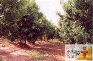 Cultivo e uso do nim: combustíveis