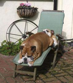 Sun bathing together