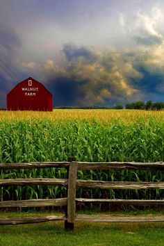 A summer storm gathers around Walnut Farm's barn and the tall and elegant golden topped corn eagerly awaits the welcomed rain. Country Barns, Country Life, Country Roads, Country Living, Country Charm, Farm Barn, Old Farm, Barn Pictures, Country Scenes