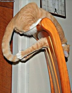 Got it. @sisterprofessor My cat used to do this all the time.