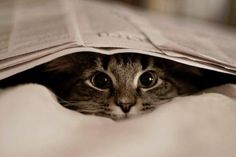 Reading the morning paper is a great way to prep your mind for the day.  ...Or you could just hide under it.