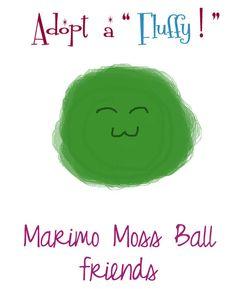 Marimo Moss Balls Aquarium pet friends desk tank supply set - four