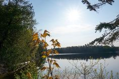 Algonquin - Happy Planet Art Shack Order Prints, Planets, Landscapes, Shots, Sunset, Water, Happy, Outdoor, Art