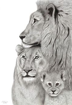 Giclee Print of Pen and Ink Drawing by Eve May of a Lion Family Also available as a card Family Tattoos For Men, Family Tattoo Designs, Lion Couple, Lion Tattoo Sleeves, Lion Sketch, Lion Family, Lion And Lamb, Lion Drawing, Lion Painting