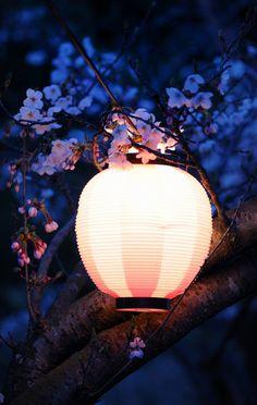 Japanese Lantern in sakura Candle Lanterns, Paper Lanterns, Tres Belle Photo, Candle Power, Japon Illustration, Purple Home, Chinese Lanterns, Japanese Art, Beautiful Places