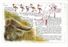 http://lalineadelhorizonte.com/blog/matar-un-elefante/