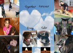 Gilbert 23_Remy & Valor Forever in our Hearts - REMY & VALOR Continued prayers for a healing heart for all of Remy & Valor's loved ones. https://www.youtube.com/watch?v=dwLWicIyM8A&feature=player_detailpage