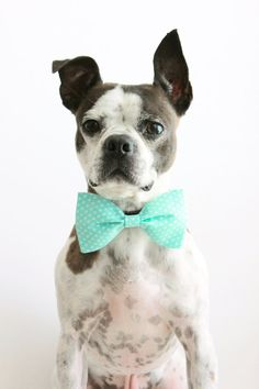 Mint Polka Dot Dog Bow Tie - Wedding Accessories For Dogs by Little Blue Feathers - www.LittleBlueFeathers.etsy.com