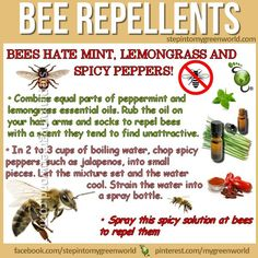 5 Best Homemade Mosquito And Insect Repellent Insects