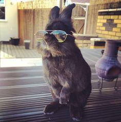 Este coelho com óculos deu início a uma batalha de memes hilários