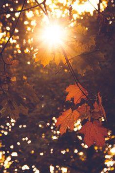 Autumn Cozy