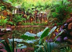Daintree Eco Lodge & Spa - stayed here in June 2012 - bewdiful