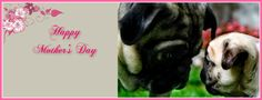 Pug Holiday Themed Facebook Cover Photos For Your Timeline. Pug Happy Mother's Day Facebook Cover Photo