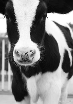 If we can live well without causing harm, why wouldn't we do it?  Learn more http://www.farmsanctuary.org/learn/factory-farming/dairy/