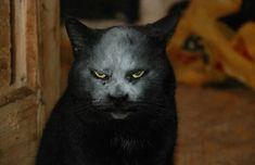 Кот, который может напугать любого до смерти -