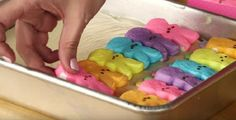 ИНГРЕДИЕНТЫ● 100 г сливочного масла● 4 яичных желтка● 1 яйцо● 1 упаковка кондитерской посыпки● 1 упаковка кондитерской смеси для печенья● 2 плитки белого шоколада● 1 банка сгущенного молока● жидкий э…