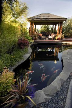 Sure, having a koi pond is rather trendy these days. A koi pond is a water feature which is designed to house koi, otherwise known as carp. Fish Pond Gardens, Koi Fish Pond, Fish Ponds, Water Gardens, Backyard Gazebo, Ponds Backyard, Garden Ponds, Backyard Ideas, Gazebo Ideas