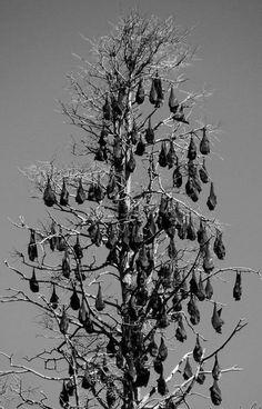 Tree full o' bats