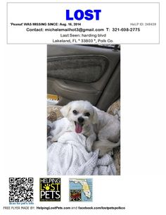 Lost Pets Polk Co Central Fl Lakeland Harding Blvd Fl 33803 Polkco Lost Dog 08 16 2014 Bichon F Losing A Pet Losing A Dog Pets