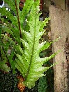 Sun Plants, Foliage Plants, Cool Plants, Indoor Plants, House Plants, Unusual Plants, Rare Plants, Exotic Plants, Palm Plant