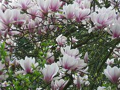 Fleurs et paysages ( printemps-été)