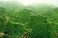 In the mouth of the China's Yangtze River, a small island holds a secret haven lost to the forces of time and nature—an abandoned fishing village swallowed by dense layers of ivy slowly creeping over every brick and path.