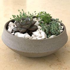 Concrete gray clay pot with succulent. . . . #ceramic #pottery #styling #succulent #clay #concrete #pot #קדרות #קרמיקה #עיצוב #עציץ #סוקולנט #בטון #סוקולנטים