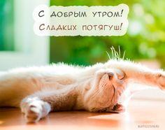 Доброе ленивое субботнее утро, друзья! Ждем вас в гости😘