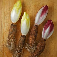 Image result for endive chicory root