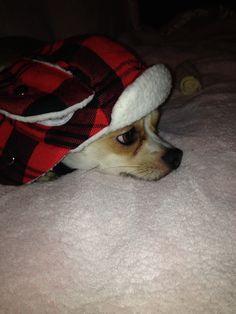 Louie isn't fond of winter so far..