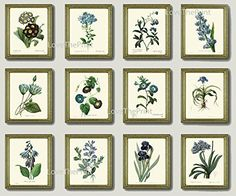 Botanical Print Set of 12 Antique Beautiful Redoute Blue Flowers Iris Plumbaqgo Primula Gentian Butterfly Plants French Garden Nature Home Room Decor Wall Art Unframed. Beautiful set of 12 prints based on antique botanical illustrations from 1802. Wonderful details, colors and natural history feel. • The prints measure 4x6, 5x7, 8x10, or 11x14 inch. based on your selection come with a white border for easy framing. • Printed on professional artist archival matte paper. • The prints are…